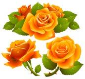 Orange roses set. Vector set of orange roses with dew drops on petals Stock Photos