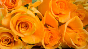 Orange roses on slate. Background Stock Photo