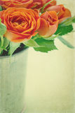 Orange roses with textured background Royalty Free Stock Photography