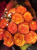 Orange Roses with a touch of Yellow. A bouquet of Roses with petals that are both Yellow and Orange. White baby`s breath in the bouquet. Some green tissue paper royalty free stock photography