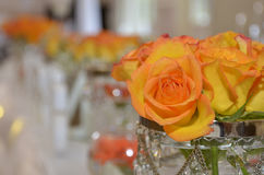 Orange roses Royalty Free Stock Photography