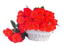 Orange  roses in white basket Royalty Free Stock Images