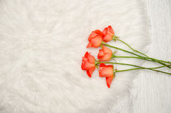 Orange roses on white fur, space for text, top view Stock Images