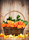 Orange roses in the wicker Royalty Free Stock Photography
