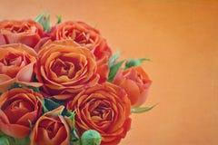 Orange rosor med texturerat bakgrunds- och kopieringsutrymme fotografering för bildbyråer