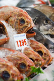 Orange Roughie at the display on a fish market Royalty Free Stock Images