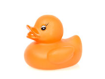 Orange rubber duck Stock Image