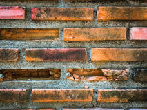 Orange rustic brick wall for background. Stock Photos