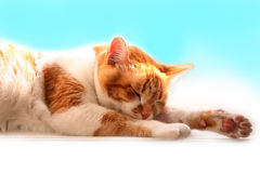 orange sömnar för katt sött royaltyfri fotografi