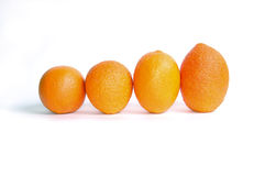 Orange's parade. Four oranges are ranged in line depending on growth Royalty Free Stock Photo