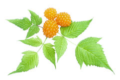 Orange salmonberry and leaves royalty free stock images