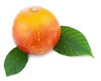 Orange sanguine avec des feuilles de vert d'isolement sur le fond blanc. Photographie stock libre de droits