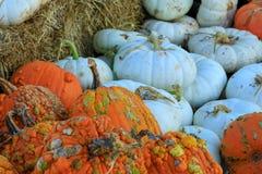 Orange sauvage et potirons blancs Photo libre de droits