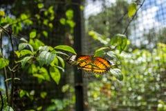 Orange Schmetterling Stockbilder