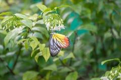 Orange Schmetterling auf dem Baum Stockfotografie
