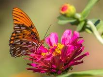 Orange Schmetterling auf rosa Blume Stockfoto
