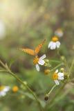 Orange Schmetterling mit Blume im Garten Stockfoto