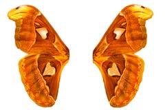 orange Schmetterlingsflügel mit Weiß Getrennt auf weißem Hintergrund Lizenzfreie Stockfotos
