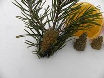 Orange Schneejahr mit Tannenzweigen Stockfotografie