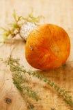 Orange-Schutzkappe Boletuspilz auf hölzernem Vorstand der Espe Lizenzfreies Stockbild