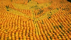 Orange sea Stock Photo