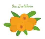 Orange sea buckthorn - healthy natural berry in cartoon flat style Royalty Free Stock Image