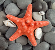 Orange sea star Stock Photo