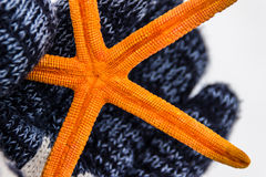 Orange sea star Royalty Free Stock Photos