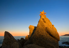 Orange sea star on rocks by the sea at sunset Stock Photos