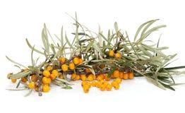 Orange seabuckthorn Stock Photo
