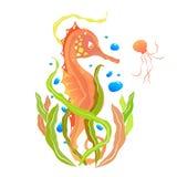 orange seahorse royaltyfri bild