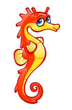 Orange seahorse Stock Photos