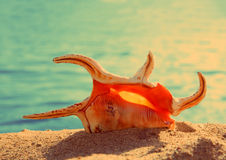 Orange seashell and sea - vintage retro style Royalty Free Stock Images