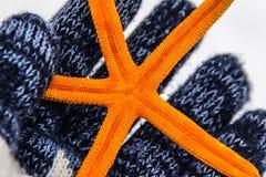 Orange Seestern Lizenzfreie Stockbilder