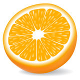 Orange segment. Isolated on a white background. Vector illustration Stock Images