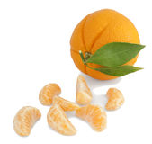 Orange and segments. Stock Photo