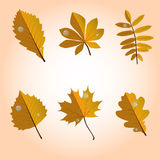 Orange set of leaves. Set of six  leaves Royalty Free Stock Photo