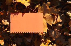 Orange sheet of notebook for your text among the yellow maple leaves Royalty Free Stock Photo