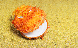 The orange shell Royalty Free Stock Image