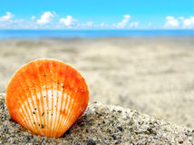 Orange shell in the sand Royalty Free Stock Photography