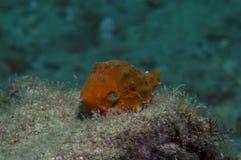 Orange shell Stock Image