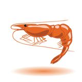 Orange shrimp Royalty Free Stock Photo