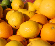 Orange and Sicilian lemons for sale in greengrocers shop Royalty Free Stock Photo