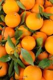 Orange of Sicily Royalty Free Stock Photo