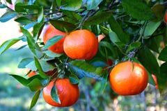 Orange Sie froh? Stockfotografie