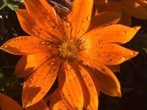 Orange Sie froh sagte ich nicht Blume Stockfotos