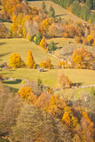 Orange sight. Autumn colors fill the whole hill Stock Photos