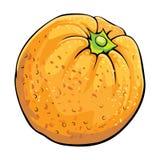 Orange. Single colorful orange on white Royalty Free Stock Images