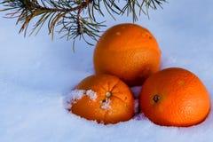 Orange Sinken in weißen Schnee stockfoto