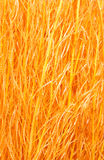 Orange sisal. On the white royalty free stock images